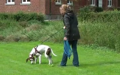 online Hundetrainer