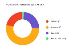 actif_corgi_pembroke