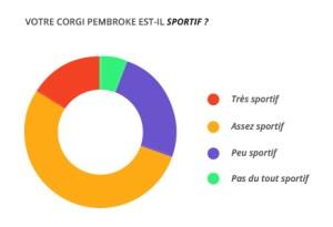 sportif_corgi_pembroke