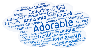 word-cloud-4