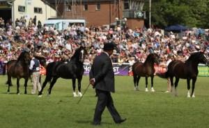 royal welsh horses