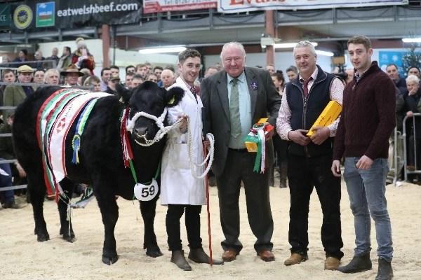 fatstock champion at royal welsh winter fair