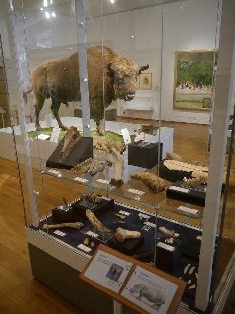 Stones and Bones Exhibition