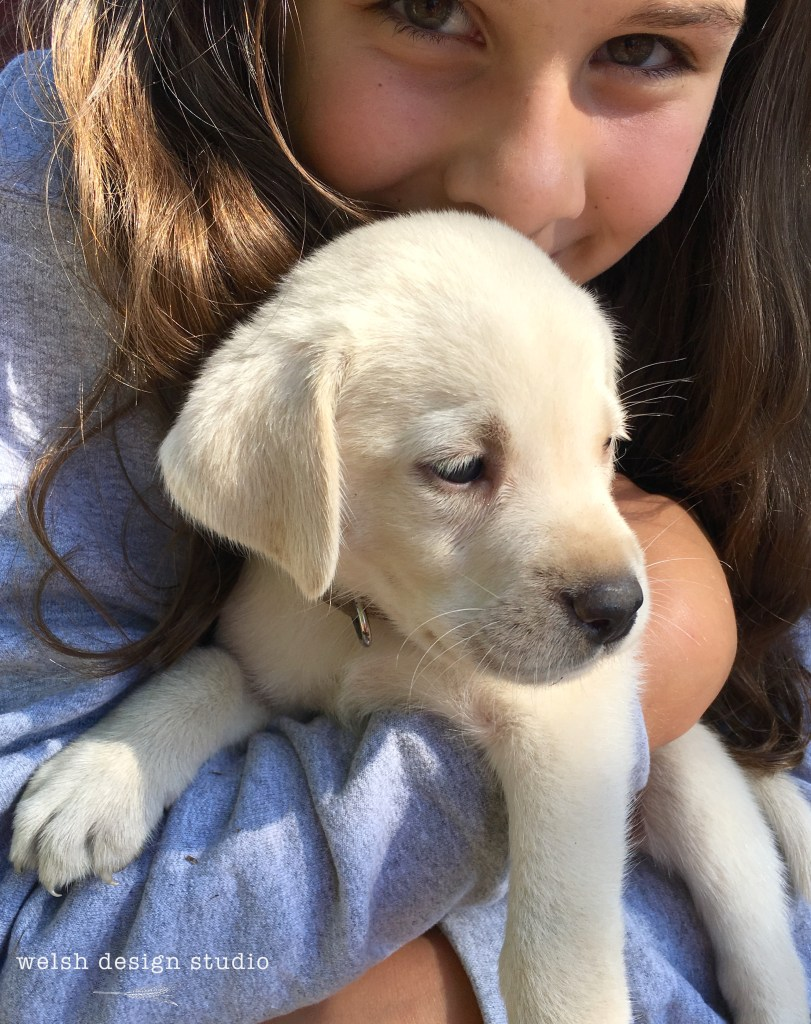 polar lab puppy