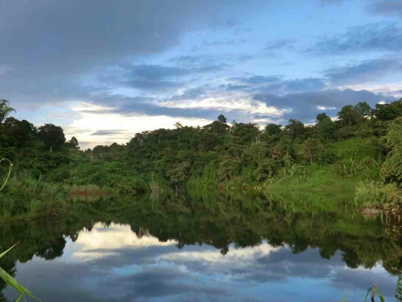 Dschungel bei Chiang Rai