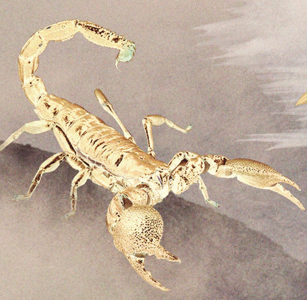 Horoskop Skorpion Für 2018 Von Virginia Bell Welt