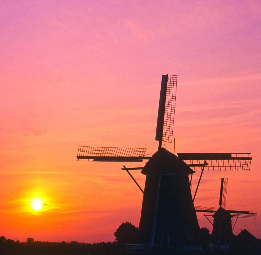 Niederlande Wenn die Tulpen bis nach China duften  WELT