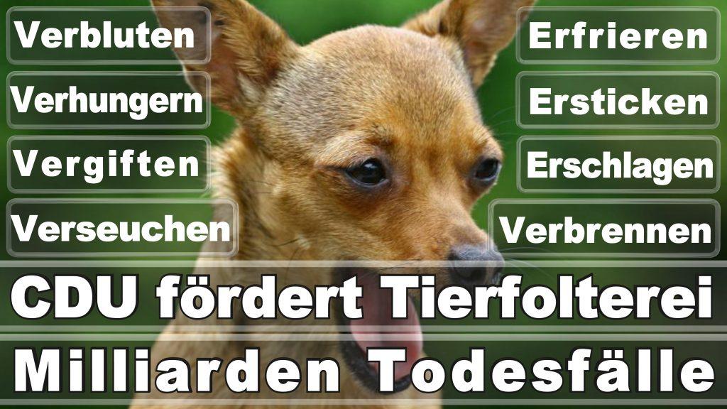 Bundestagswahl 2017 Umfrage Stimmzettel Angela Merkel CDU Tierversuche Tierquälerei Hauptschule Realschule Grundschule Gymnasium (1)