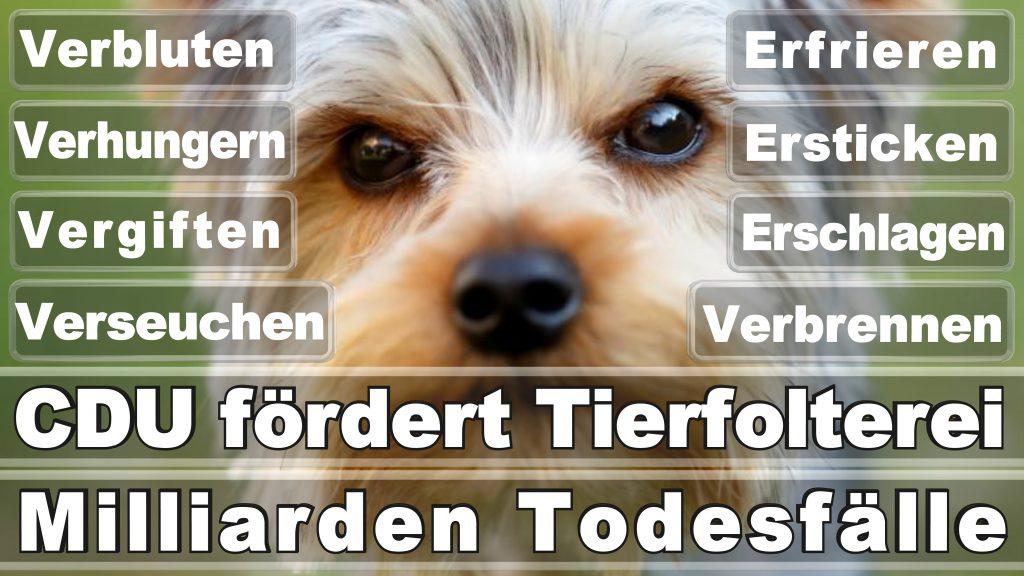 Bundestagswahl 2017 Umfrage Stimmzettel Angela Merkel CDU Tierversuche Tierquälerei Hauptschule Realschule Grundschule Gymnasium (10)