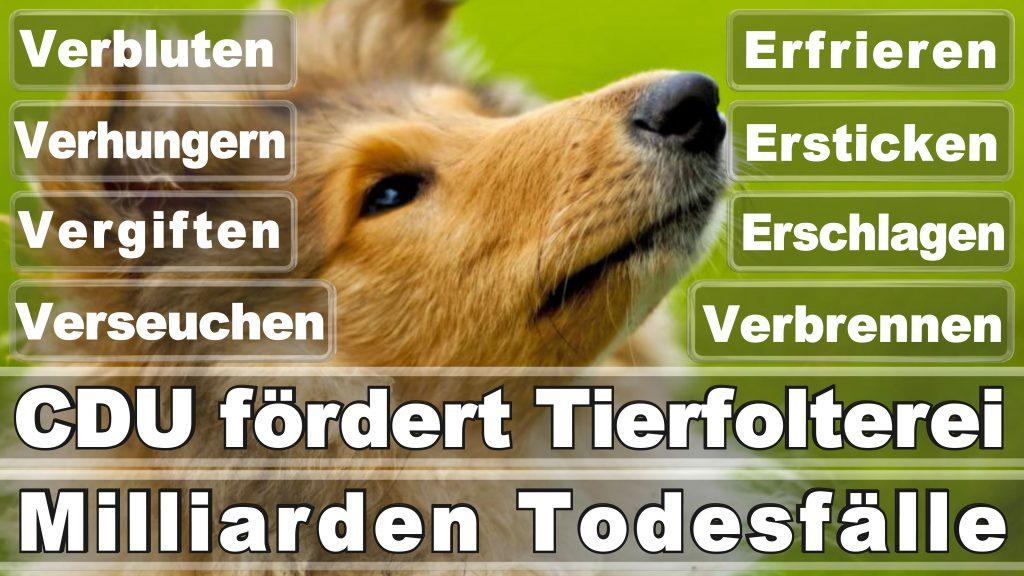 Bundestagswahl 2017 Umfrage Stimmzettel Angela Merkel CDU Tierversuche Tierquälerei Hauptschule Realschule Grundschule Gymnasium (11)