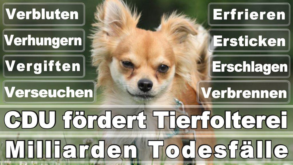 Bundestagswahl 2017 Umfrage Stimmzettel Angela Merkel CDU Tierversuche Tierquälerei Hauptschule Realschule Grundschule Gymnasium (13)