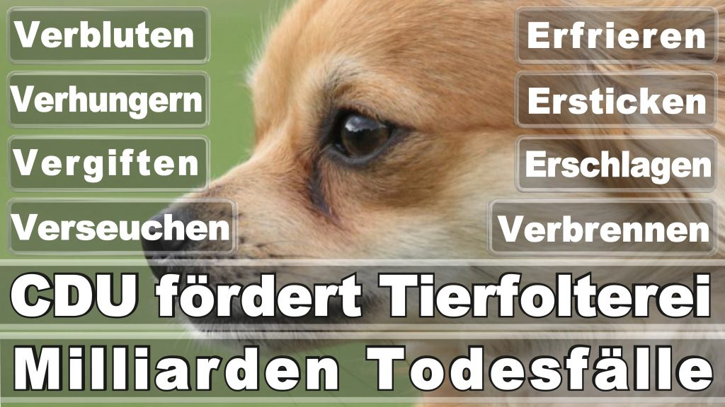 Angela Merkel CDU Tierversuche Tierquälerei Hauptschule Realschule Grundschule Gymnasium (14)