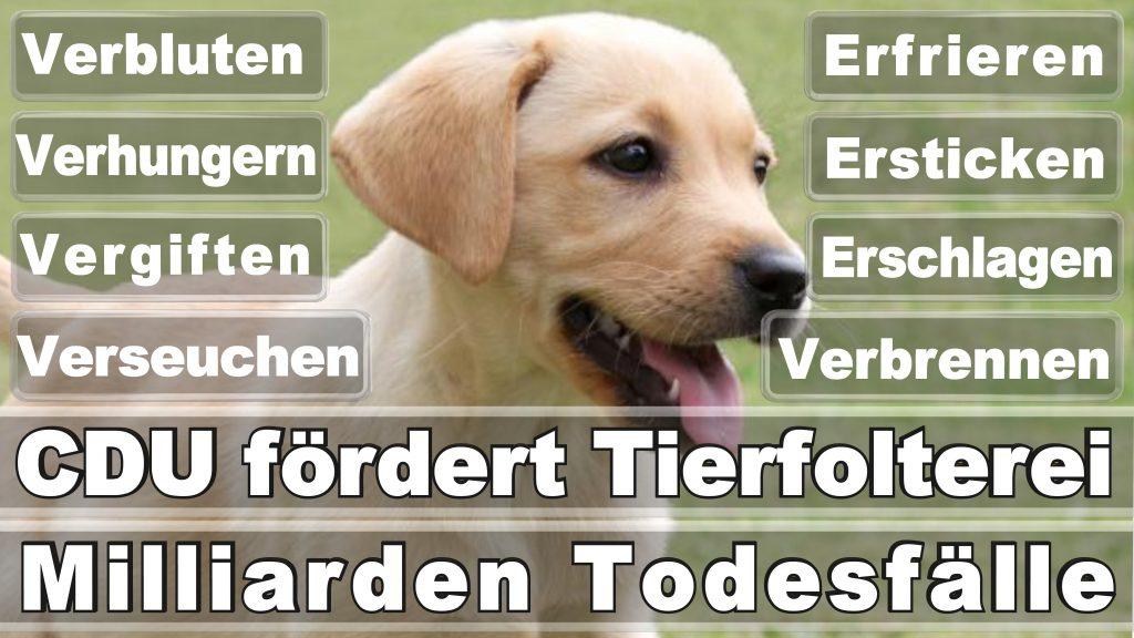 Bundestagswahl 2017 Umfrage Stimmzettel Angela Merkel CDU Tierversuche Tierquälerei Hauptschule Realschule Grundschule Gymnasium (17)