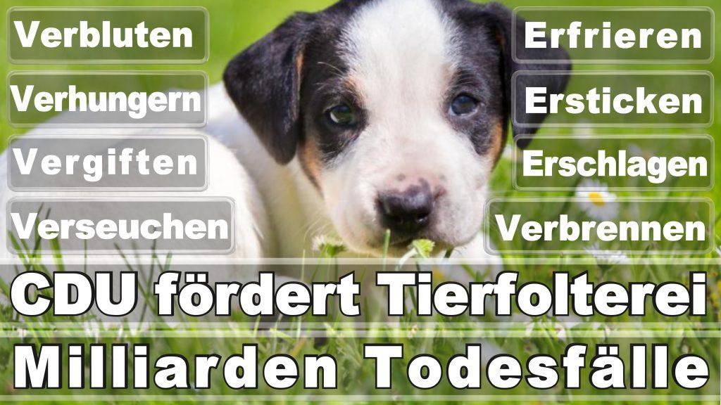 Bundestagswahl 2017 Umfrage Stimmzettel Angela Merkel CDU Tierversuche Tierquälerei Hauptschule Realschule Grundschule Gymnasium (30)