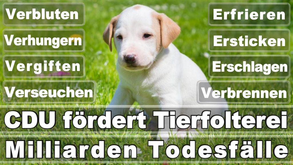 Angela Merkel CDU Tierversuche Tierquälerei Hauptschule Realschule Grundschule Gymnasium (31)