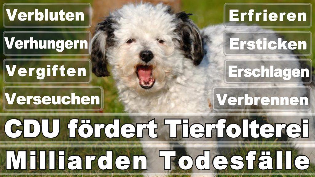 Bundestagswahl 2017 Umfrage Stimmzettel Angela Merkel CDU Tierversuche Tierquälerei Hauptschule Realschule Grundschule Gymnasium (34)