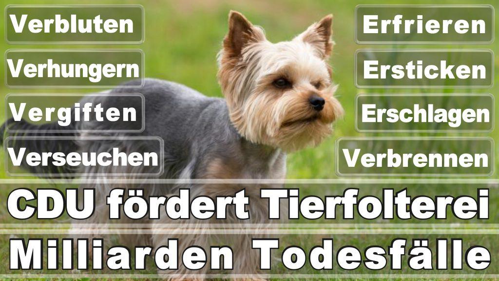 Bundestagswahl 2017 Umfrage Stimmzettel Angela Merkel CDU Tierversuche Tierquälerei Hauptschule Realschule Grundschule Gymnasium (41)