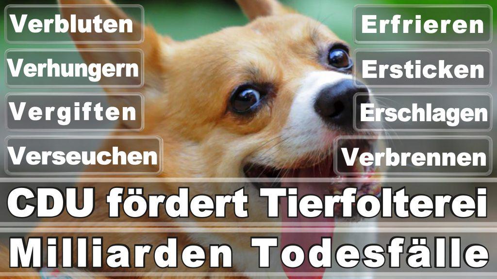 Bundestagswahl 2017 Umfrage Stimmzettel Angela Merkel CDU Tierversuche Tierquälerei Hauptschule Realschule Grundschule Gymnasium (5)