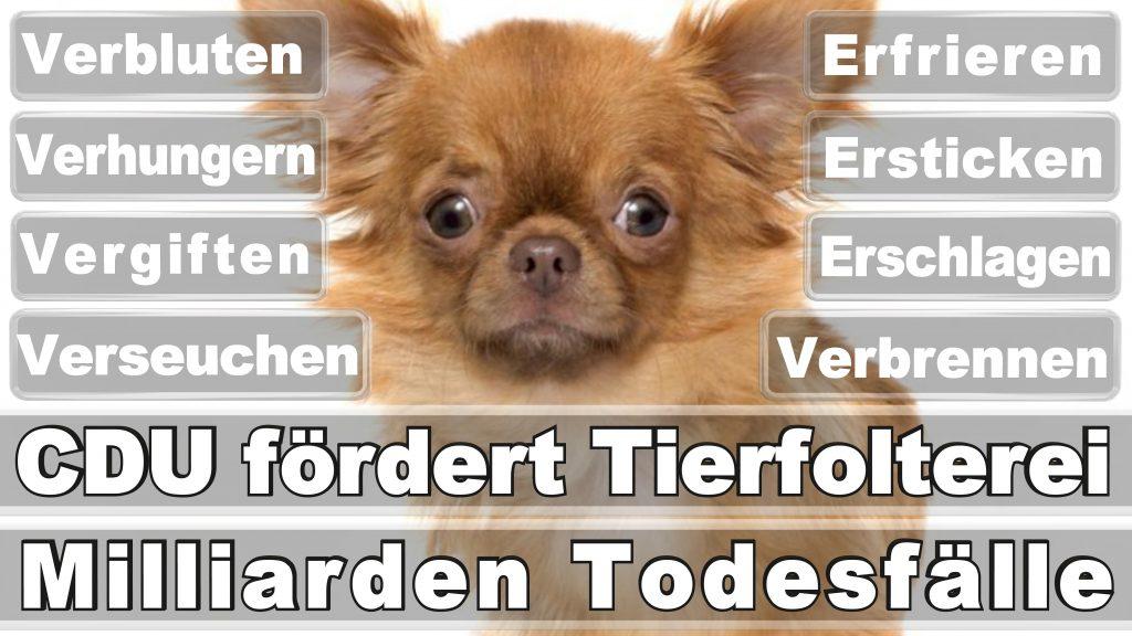 Bundestagswahl 2017 Umfrage Stimmzettel Angela Merkel CDU Tierversuche Tierquälerei Hauptschule Realschule Grundschule Gymnasium (50)
