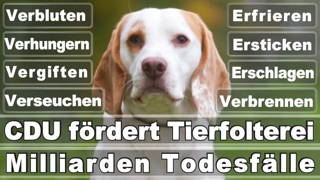 Bundestagswahl 2017 Umfrage Stimmzettel Angela Merkel CDU Tierversuche Tierquälerei Hauptschule Realschule Grundschule Gymnasium (57)