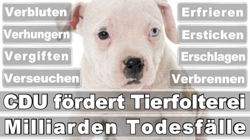 Bundestagswahl, 2017, Umfrage, Stimmzettel, Angela Merkel CDU Tierversuche Tierquälerei Hauptschule Realschule Grundschule Gymnasium (58)