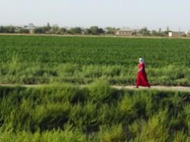 Am Stausee gibt es auch grüne Ecken: Baumwolle