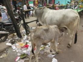 lieber Milch als Müll