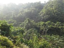 menschenleerer Dschungel