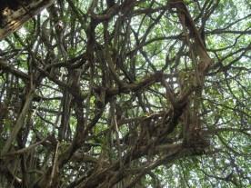 Ein Baum!