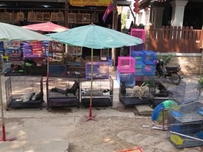 Tiermarkt am Straßenrand