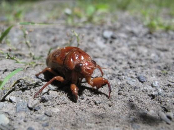 auch ein Käfer