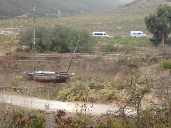 Schiff im Weinberg