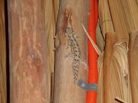 Der kleine Kerl hatte in unserer Hütte viel Moskitofutter