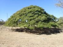 So ein großer Baum ...