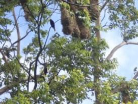 Baum-Siedlung