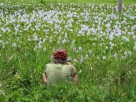Wasserlilien-Für so ein Foto habe ich in China mal eine Kamera versenkt.