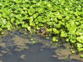 Wo versteckt sich die Ente?