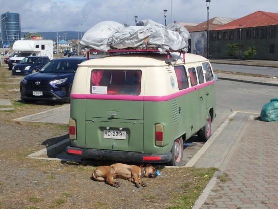 Bulli mit Wachhund