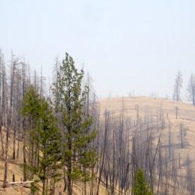 USA-Nationalpark-Waldbrand