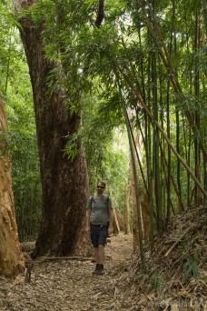 Road to Hana - Waikamoi 008
