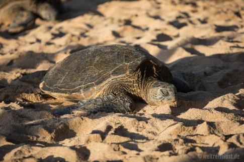 Hookipa Beach Park - Schildkröten 002
