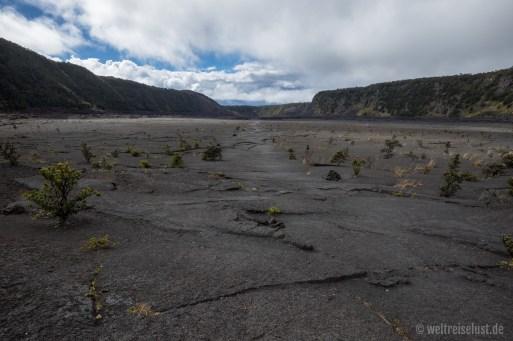 Big Island - Volcano - Iki Trail (3)
