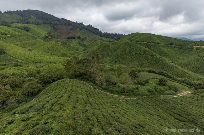Der berühmteste Aussichtspunkt auf die BOH Teeplantage