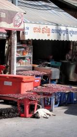 weltreise kambodscha phnom penh -0030