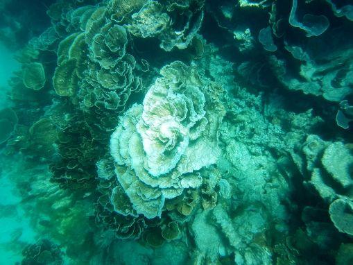 Australien – Coral Bay