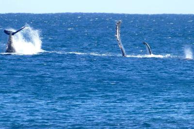 weltreise nocker australien - Gnaraloo Bay - Carnarvon_130