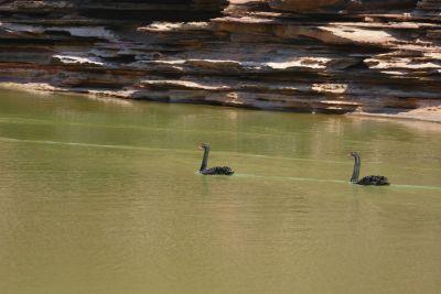 weltreise nocker australien - Kalbarri National Park_264