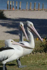 weltreise nocker australien - Kalbarri National Park_276