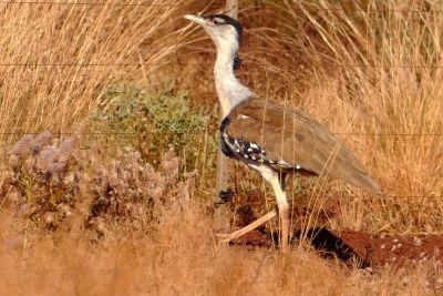 weltreise nocker australien - Karrijini National Park_758
