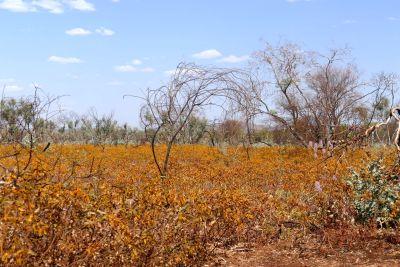 weltreise nocker australien - Karrijini National Park_831